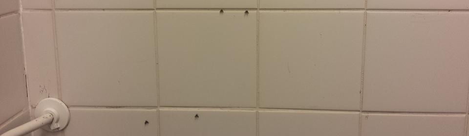 Rioolvliegjes bestrijden in een badkamer in Leeuwarden